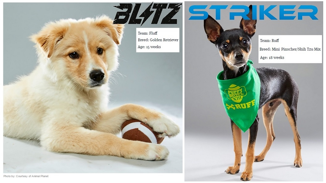 puppybowl_roster
